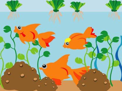 Goldfish Tank Set Up